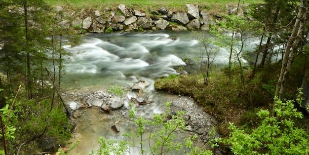 Splendido scenario di un fiume in una foresta circondata da alberi verdi Foto Gratuite