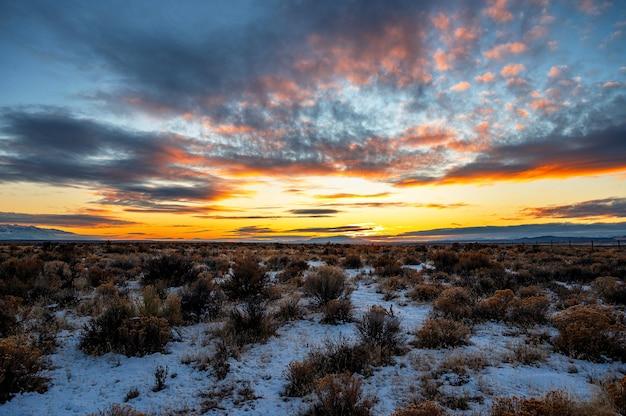 雪に覆われた低木の上の日の出の美しい風光明媚なショット 無料写真
