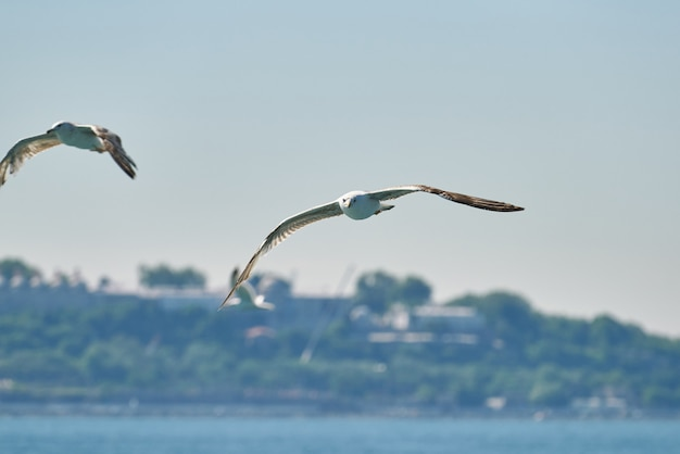 Beautiful seagull flying in the air Premium Photo