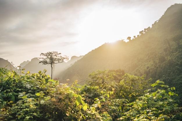 Splendido sole al tramonto su un paesaggio di montagna della foresta Foto Gratuite