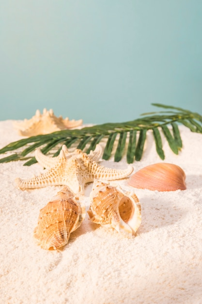 Beautiful shells and leaves on beach Free Photo