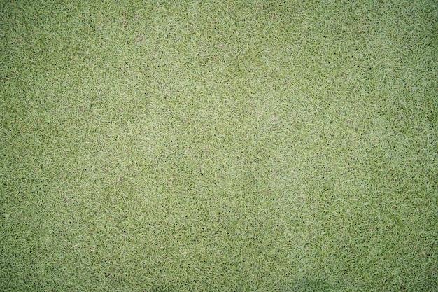 Beautiful short green grass Premium Photo