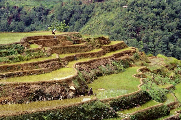 Beautiful shot of the banaue rice terraces with a forested hill in philippines Free Photo