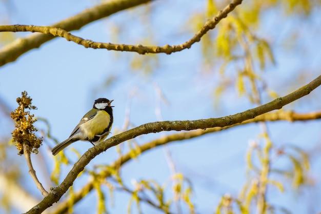 Bella ripresa di un uccello seduto su un ramo di albero in fiore con il cielo blu Foto Gratuite
