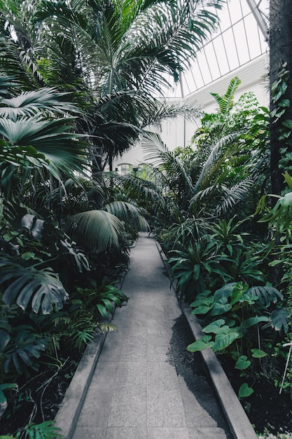 Beautiful shot of a botanical garden with exotic tropical plants and trees Free Photo
