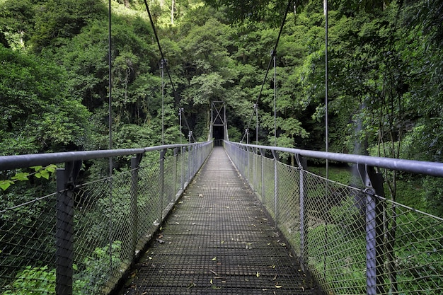 Beautiful shot of a bridge in the middle of a forest surrounded by green trees and plants Free Photo