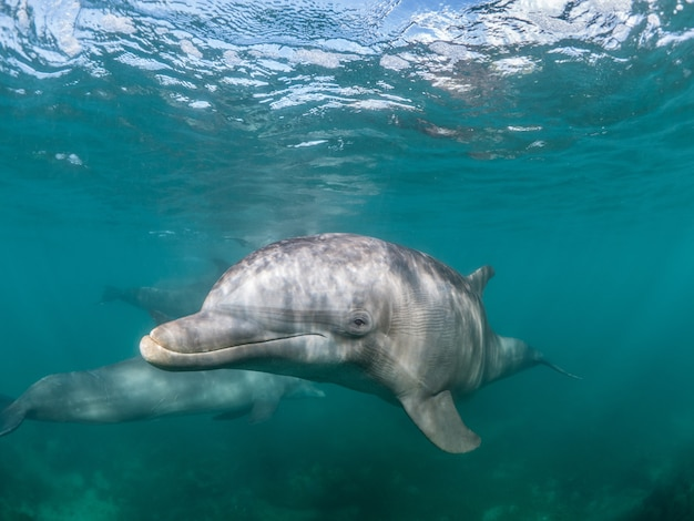 Beautiful shot of a common bottlenose dolphin living his best life under the sea Free Photo