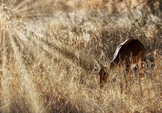 Bellissimo scatto di un simpatico cervo nei campi Foto Gratuite
