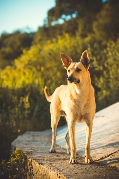 Beautiful shot of a cute dog with raised ears Free Photo