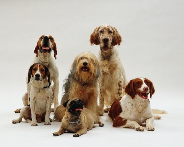 Bellissimo colpo di diverse razze canine in posa Foto Gratuite