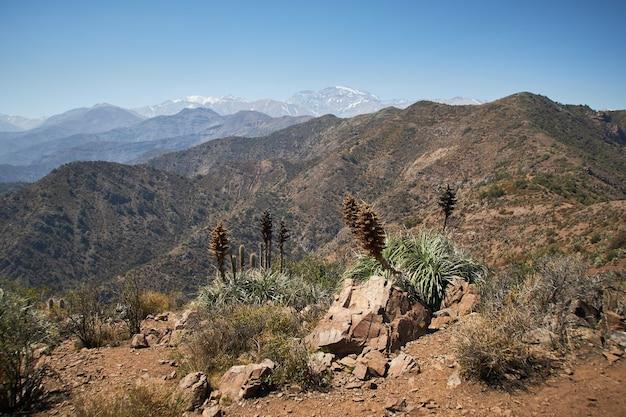 Bellissimo scatto di piante secche e cespugli sulle montagne Foto Gratuite