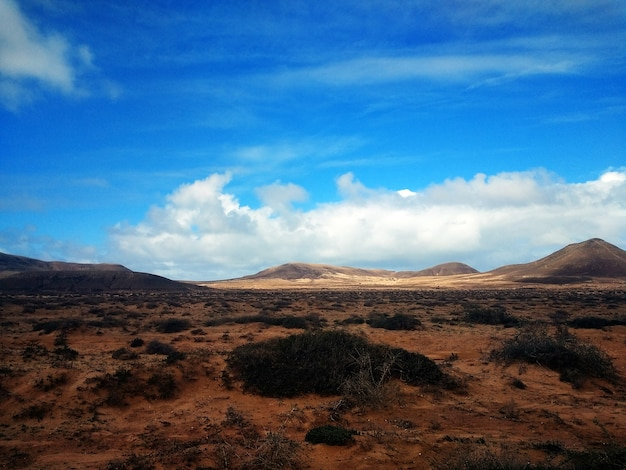 Beautiful shot of drylands and bushes in corralejo natural park, spain Free Photo