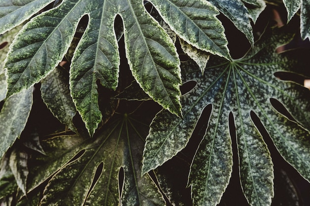 Beautiful shot of exotic tropical leaves Free Photo
