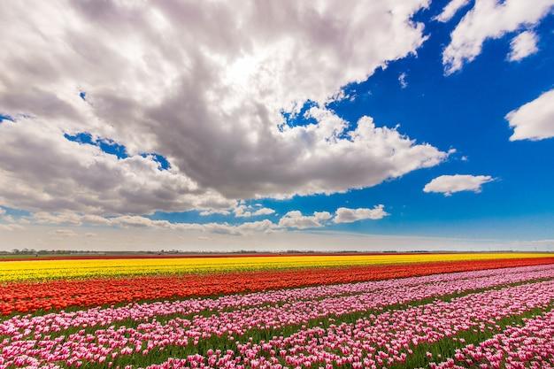 Bella ripresa di un campo con fiori di colore diverso sotto un cielo nuvoloso blu Foto Gratuite