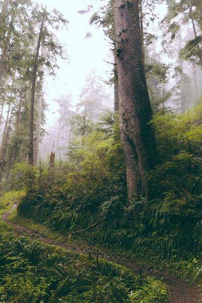 Bellissimo scatto di un bosco di sera Foto Gratuite