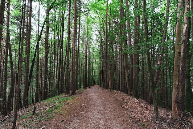 Beautiful shot of a forest full of trees and a small path in the middle of it Free Photo
