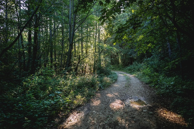 Beautiful shot of a forest road surrounded by greenery Free Photo