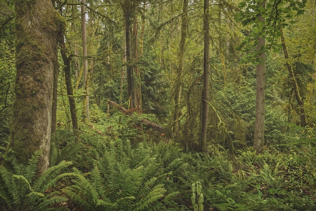 Beautiful shot of a forest with mossy trees and green leafed plants Free Photo