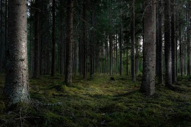 Bella ripresa di una foresta con alti alberi verdi Foto Gratuite