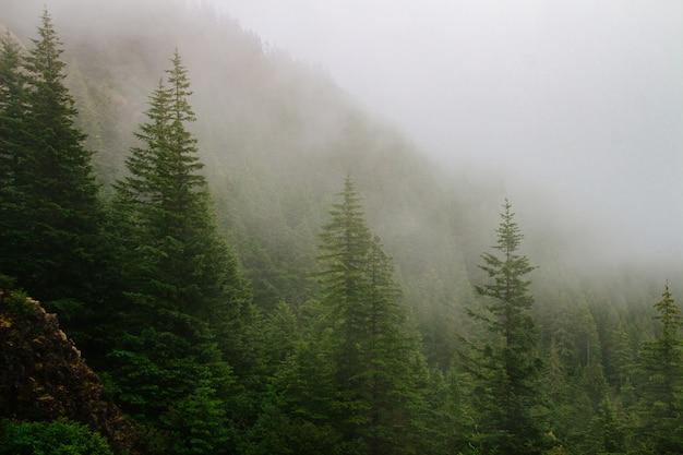 Bellissimo scatto di una montagna boscosa nella nebbia Foto Gratuite