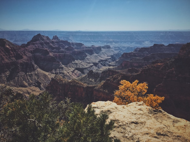 Beautiful shot of the grand canyon national park north rim on a sunny day Free Photo