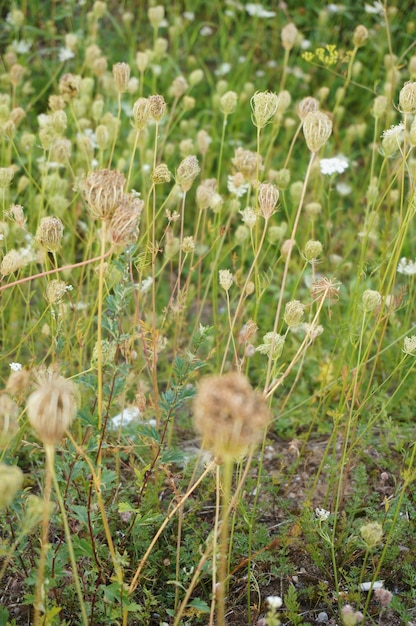 Bella ripresa dell'erba e dei fiori di campo Foto Gratuite
