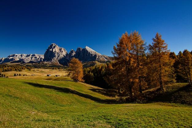Bella ripresa di un campo erboso con alberi e montagne in lontananza nelle dolomiti italia Foto Gratuite