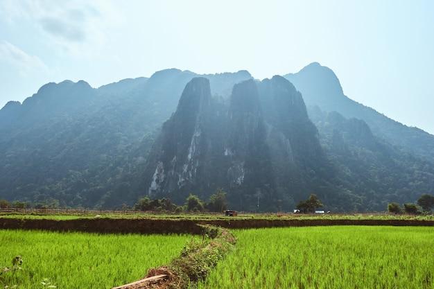 Bella ripresa delle montagne carsiche con risaie in primo piano a vang vieng, laos Foto Gratuite