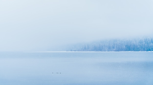 Beautiful shot of a lake with snowy trees in the distance under the fog Free Photo