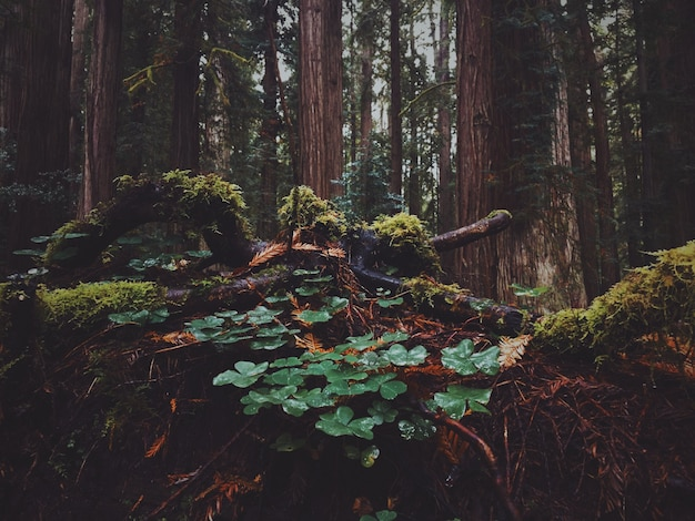 Beautiful shot of leaves in the forest with moss growing on them on a rainy day Free Photo