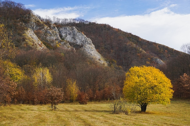 Beautiful shot of a lonely tree with yellow leaves standing in a field surrounded by hills Free Photo
