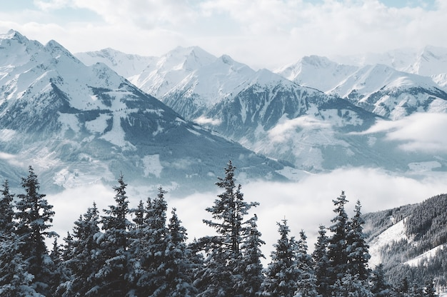 Beautiful shot of mountains and trees covered in snow and fog Free Photo