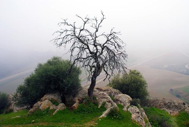 Bella ripresa di un albero nudo con colline nebbiose Foto Gratuite