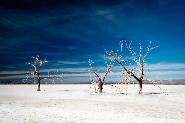雪に覆われた地面と背景の暗い空で育つ3本の凍った裸の木の美しいショット 無料写真