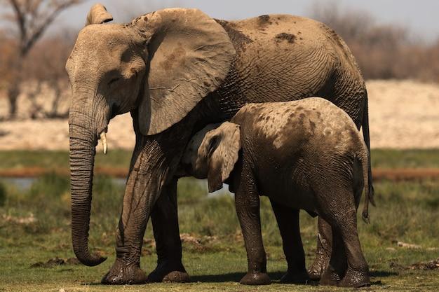 Красивый снимок слоненка, обнимающего свою мать Бесплатные Фотографии