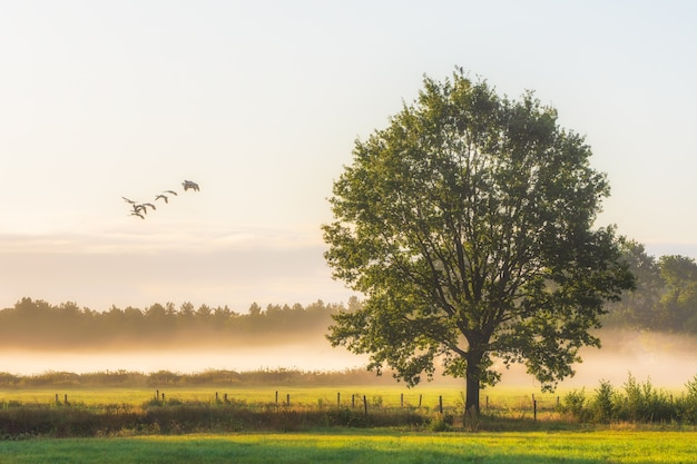 잔디 필드에 큰 녹색 잎이 많은 나무의 아름다운 샷 무료 사진