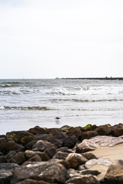 岩のビーチの砂の上を歩く鳥の美しいショット 無料写真