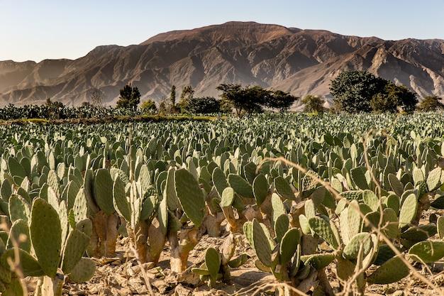 遠くに木々や山々があるサボテン畑の美しいショット 無料写真