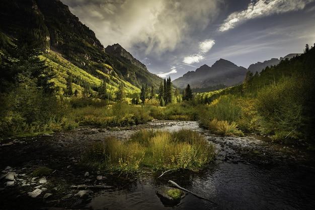 さまざまな種類の植物でいっぱいのカラフルな秋の森の美しいショット 無料写真