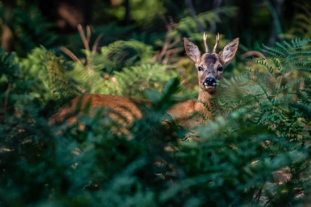 森の中のかわいい鹿の美しいショット 無料写真