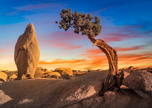 Красивый снимок безлюдной местности с валунной скалой и изолированным деревом сабаль-пальметто Бесплатные Фотографии