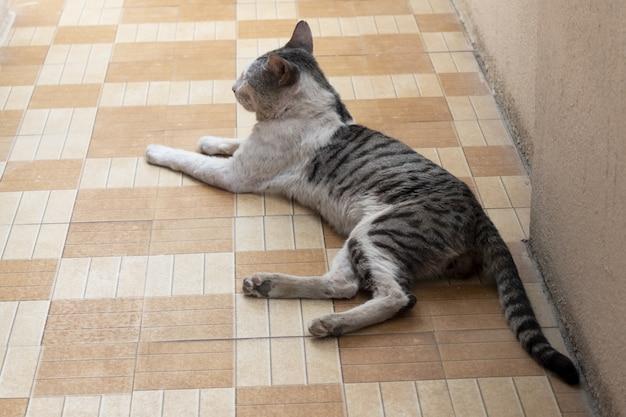 床タイルで休んでいる飼い猫の美しいショット 無料写真