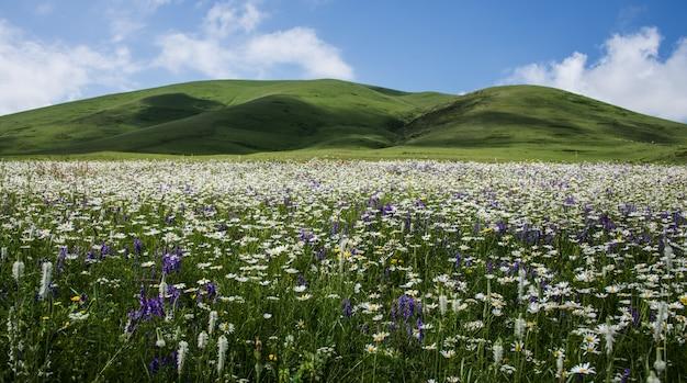 Красивый снимок поля, полного полевых цветов в окружении холмов Бесплатные Фотографии