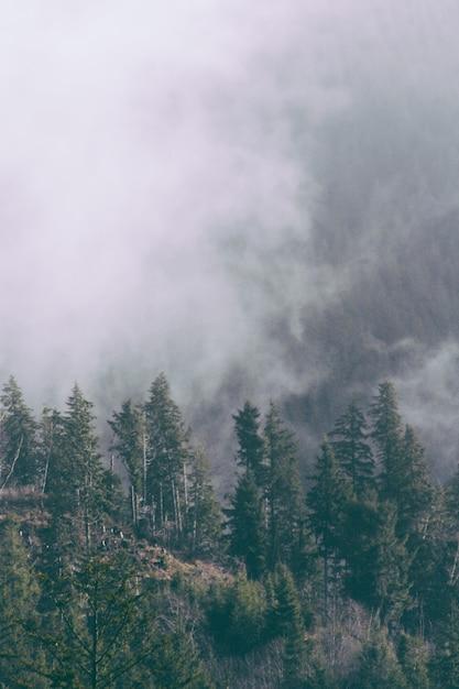 Красивый выстрел из туманного леса вечером Бесплатные Фотографии