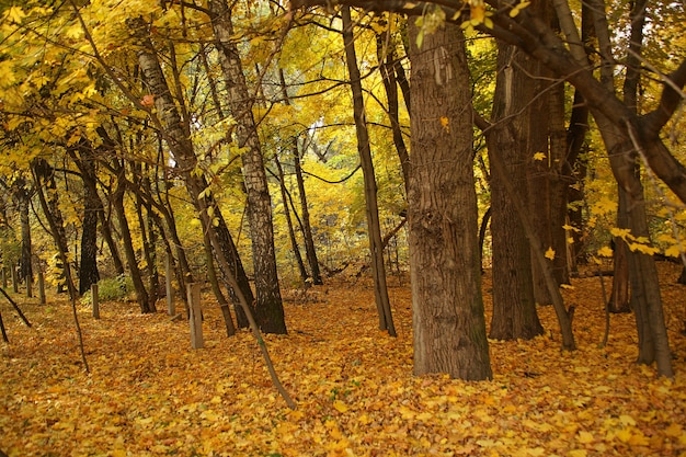 ロシアの地面に裸の木と黄色の紅葉の森の美しいショット 無料写真