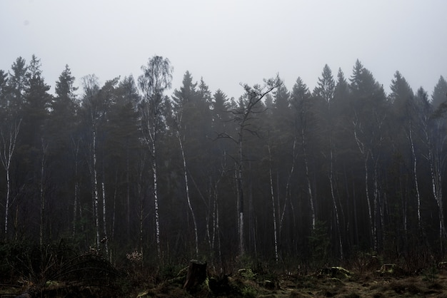 Красивый снимок леса с высокими деревьями и растениями с туманным небом Бесплатные Фотографии