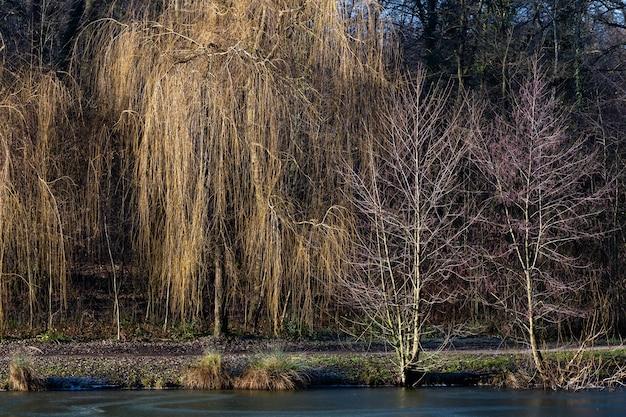 Красивый снимок озера с деревьями в лесном парке максимир в загребе, хорватия в дневное время Бесплатные Фотографии