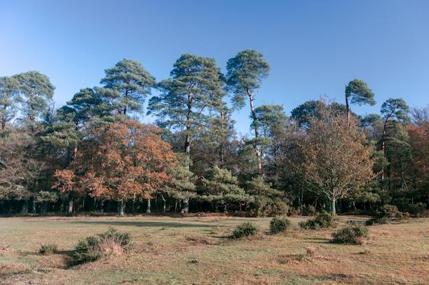 英国ブロッケンハースト近くの新しい森の木々の美しいショット 無料写真