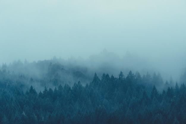 안개와 안개가 자욱한 신비한 숲의 아름다운 샷 무료 사진