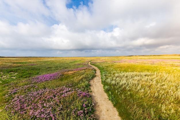 Красивый снимок узкой дорожки посреди травянистого поля с цветами под облачным небом Бесплатные Фотографии